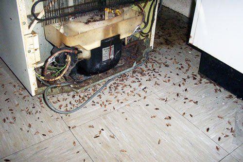 тараканы в холодильнике фото